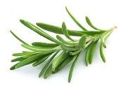 Rosemary Infused E.V. Olive Oil
